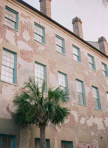 Charleston Palm