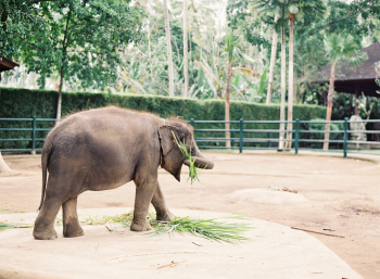 Elephants in Ubud Bali