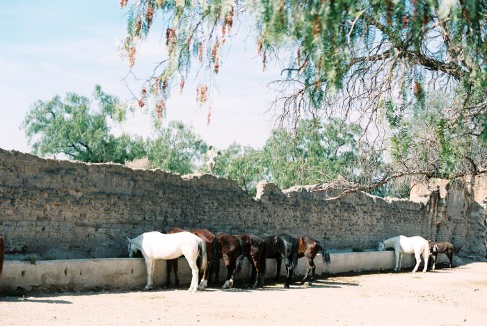 Horses at Hacienda las Trancas