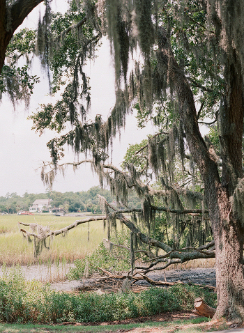 Live Oak on the Marsh