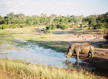 Rhino at Kapama Private Game Reserve
