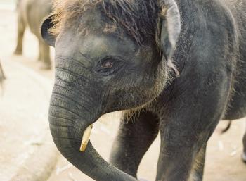 Riding Elephants in Bali
