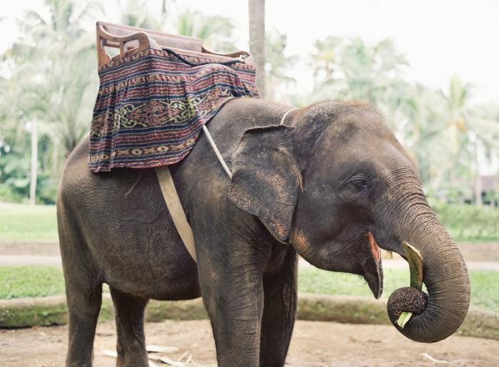 Riding Elephants in Ubud