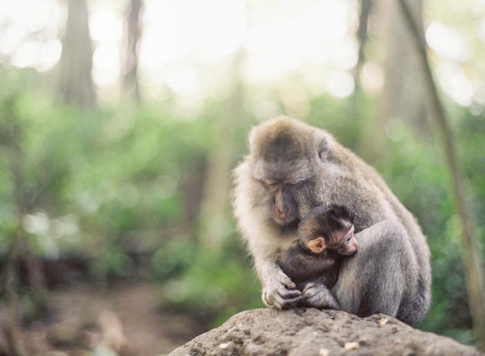 Mama and Baby Monkey