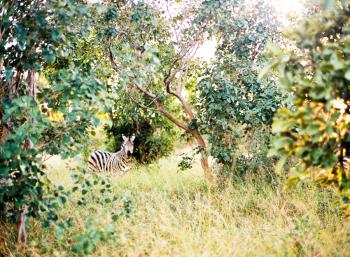 Safari at Kapama Private Game Reserve