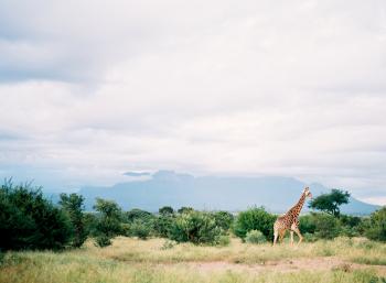 Safari at Kapama Game Lodge