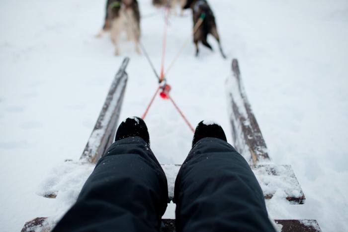 Sledding in Iceland