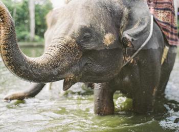 Ubud Bali Elephant Camp