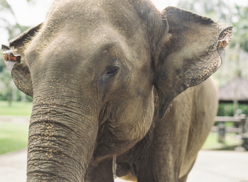 Ubud Elephant Camp