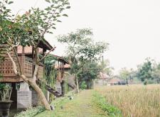 Kajane Yangloni
