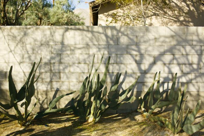 California Desert Cactus