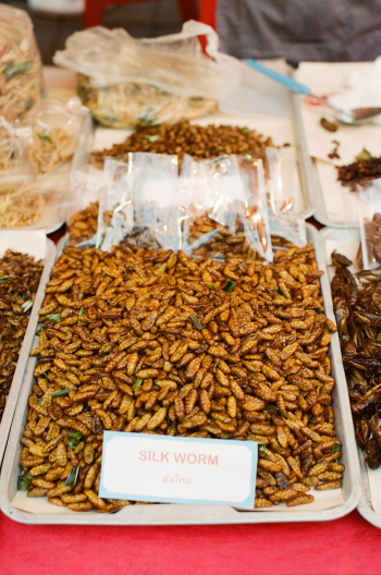 Deep Fried Bugs Thailand