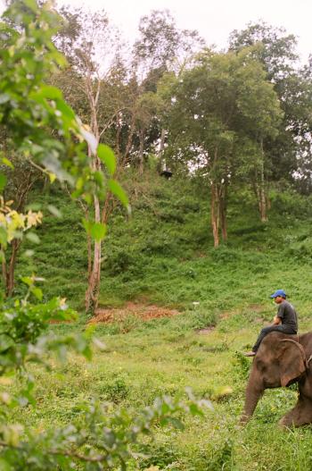 Elephant Trek Chiang Mai
