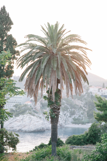 Palm Tree Croatia Coast