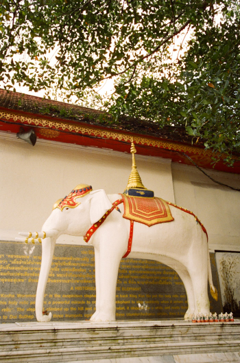 White Elephant Shrine Doi Suthep Temple