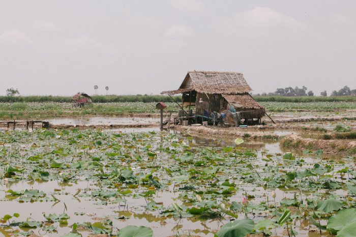 Cambodia Lily Pads