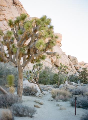 Hiking Trail in Joshua Tree