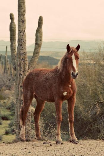 Horse in Arizona