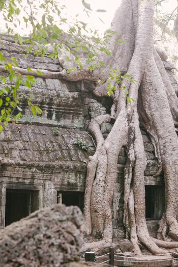 Tree Ta Prohm Ruins