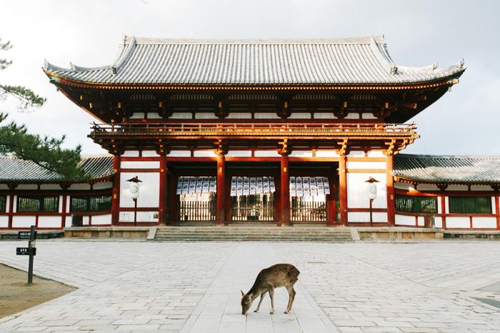 Lone Deer in Nara