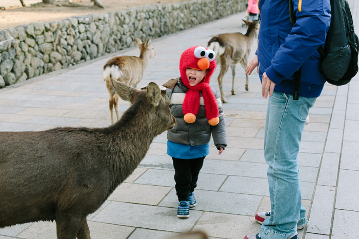 Petting Deer in Nara