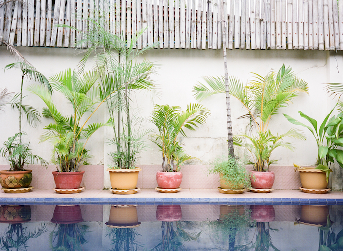 Potted Plants in Koh Kong Cambodia