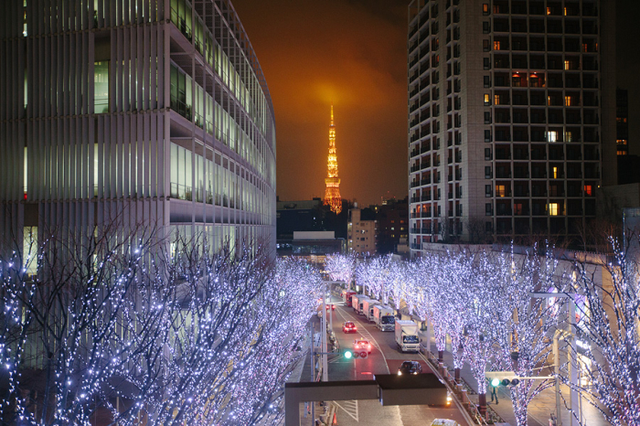Roppongi Hills Trees at Night