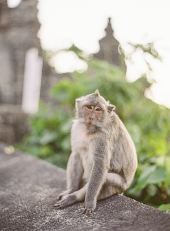 Uluwatu Temple Monkey