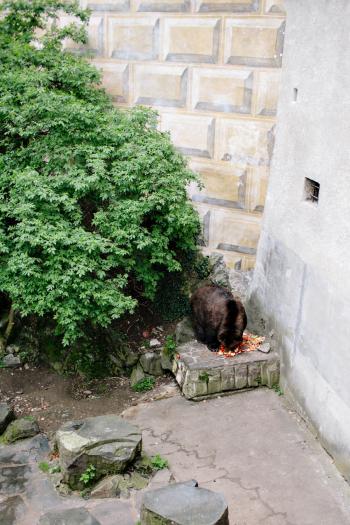 Bears Cesky Krumlov Castle