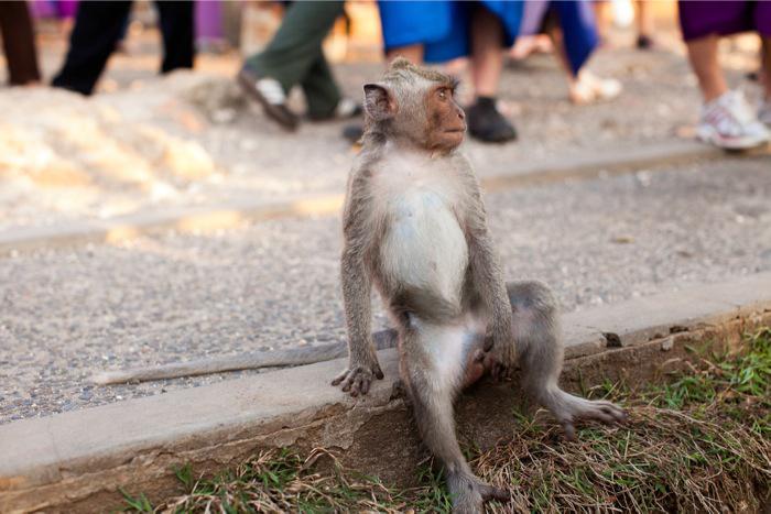 Monkey at Pura Luhur Uluwatu Bali