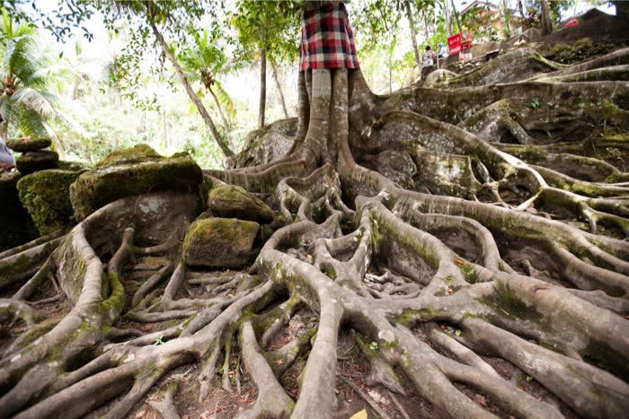 Trees at Goa Gajah Bali
