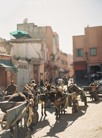 Donkeys in the Streets of Morocco