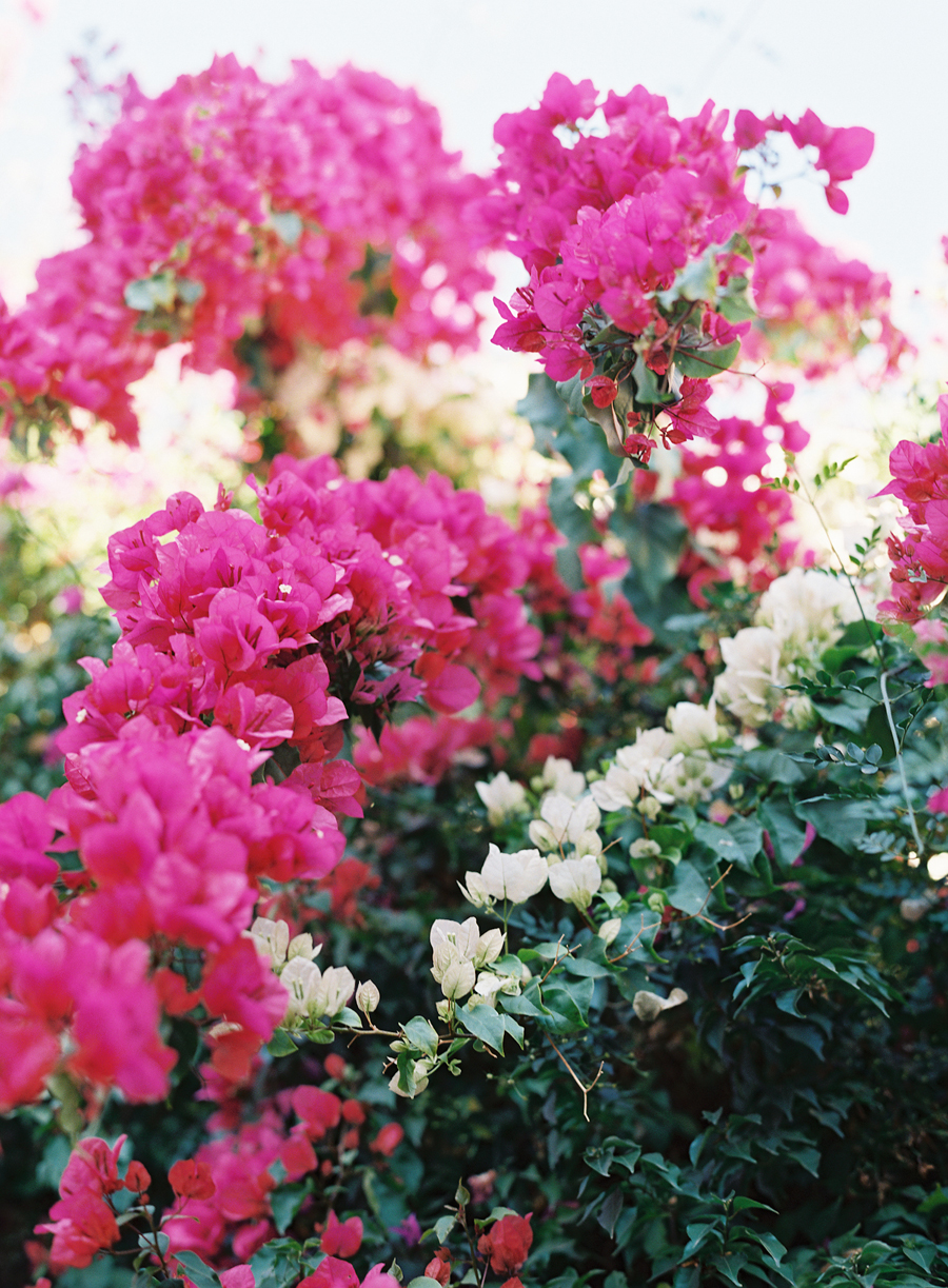 Pink Flowers In Morocco Entouriste
