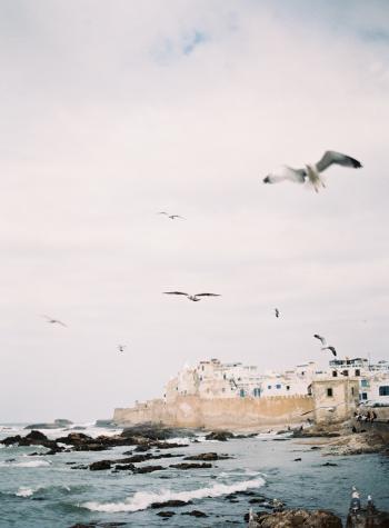 Seagulls on the Coast of Morocco