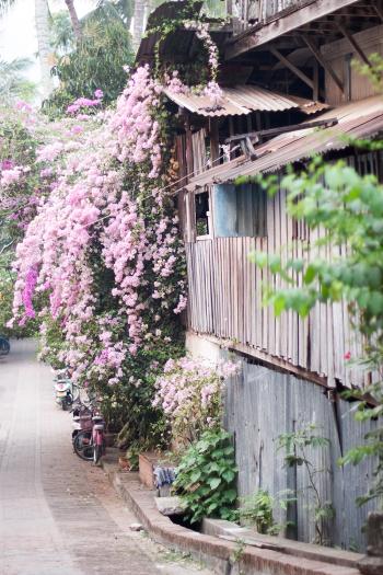 Tin Buildings of Luang Prabang