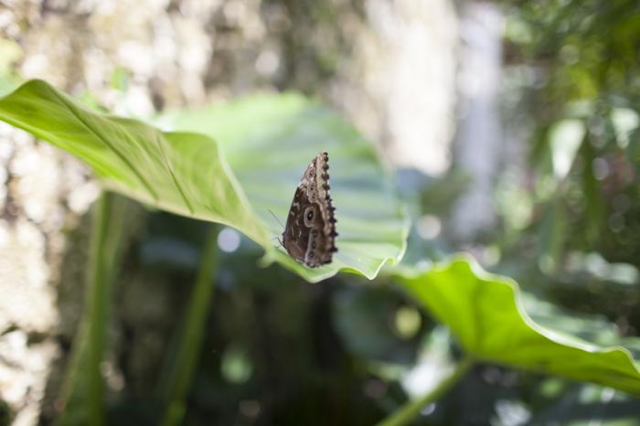 Butterfly at the Fairchild Tropical Botanic Garden