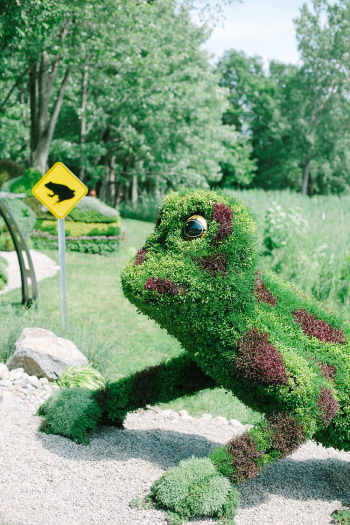 Frog at the Jardin Botanique of Montreal