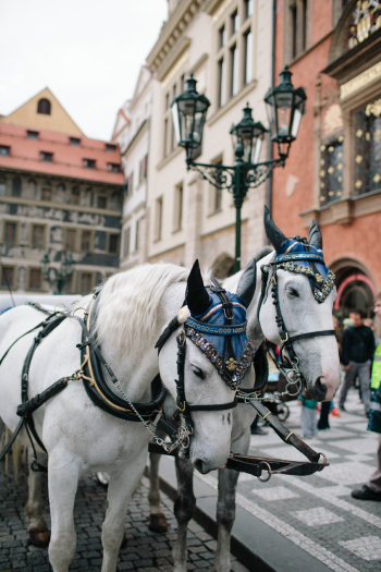 Horse and Carriage Prague