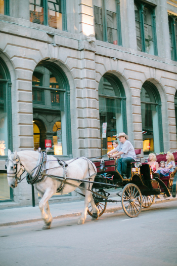 Horse and Carriage in Montreal