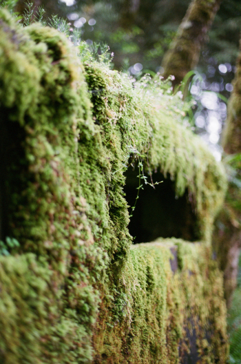 Moss Covered Bridge in Oregon