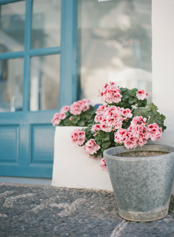Pink Potted Flowers in Santorini