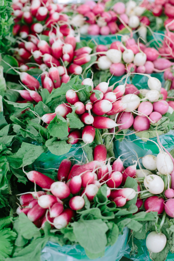 Radishes in Montreal