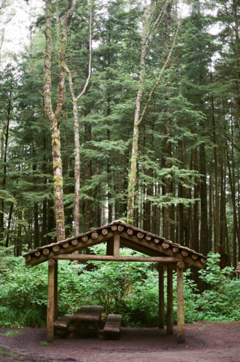 Rain Shelter in Oregon Forest