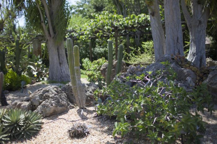 Vegetation of the Fairchild Tropical Botanic Garden