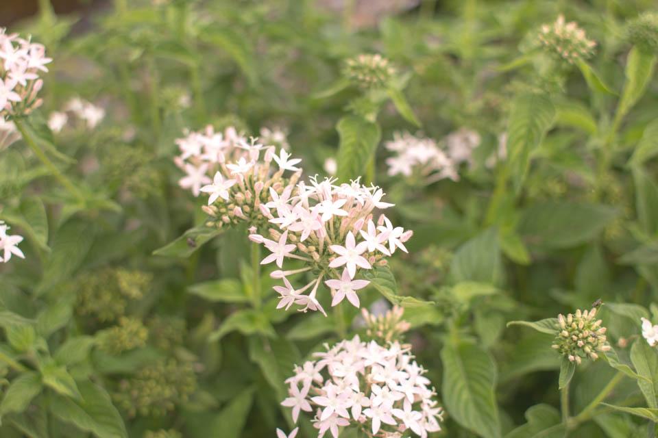 White Flowers In Hawaii Entouriste