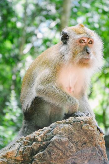 Monkey at Pulau Dayang Bunting in Malaysia