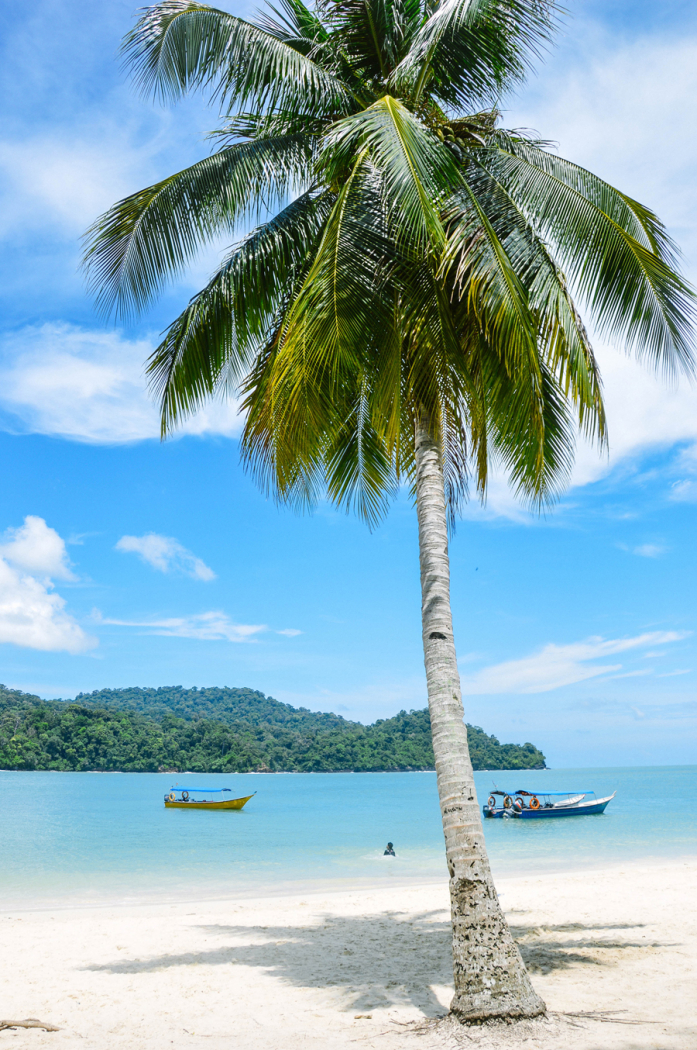 Palm Tree On The Beach In Malaysia