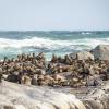 Seals at Seal Island Cape Town