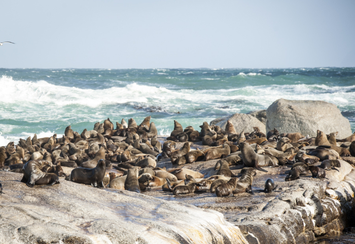 Seals at Seal Island Cape Town