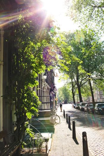 Sunlit Streets in Amsterdam